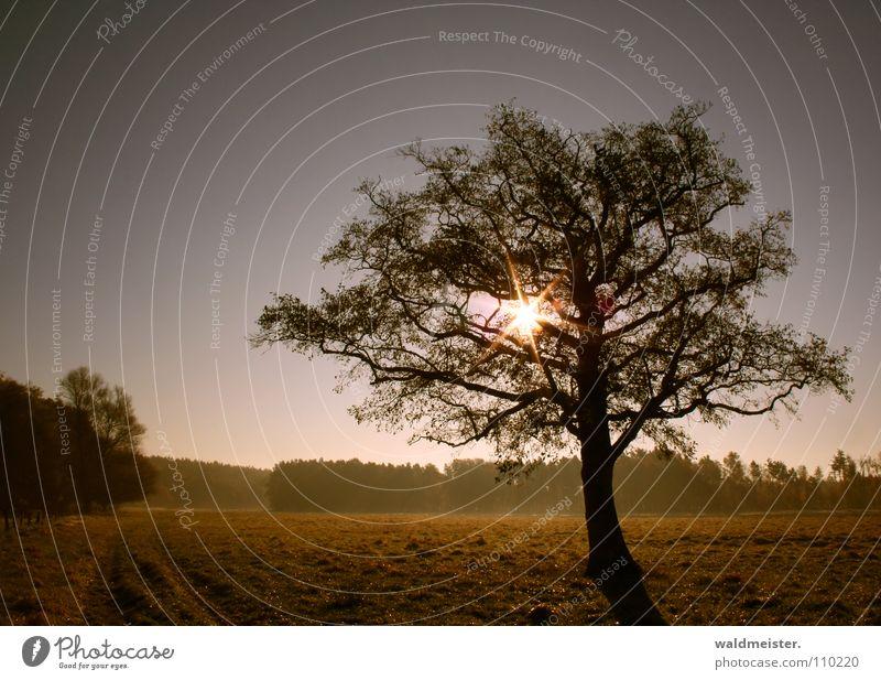 Baum Sonne Wiese Himmel Romantik ruhig Sehnsucht Einsamkeit Landschaft Natur Dunst Erholung