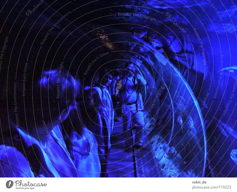 Deep blue sea... Unterwasseraufnahme Haifisch trocken Reflexion & Spiegelung Meer Tiefsee beobachten Aquarium Wissenschaften Wasser Eisenrohr blau