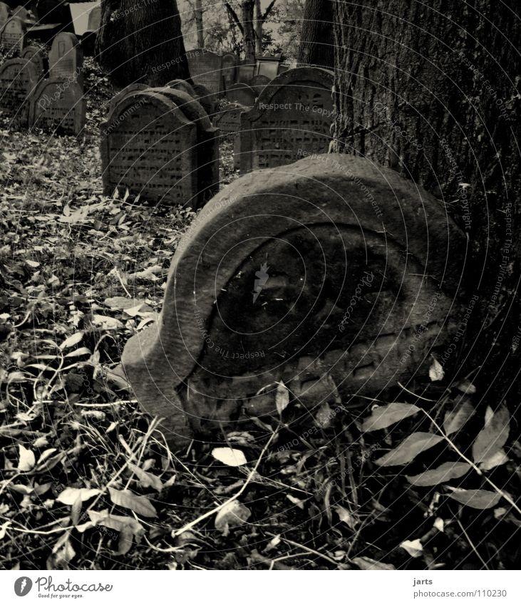 staub zu staub Friedhof Grab Grabstein Ewigkeit Hölle Trauer gruselig beerdigen vergessen Religion & Glaube Hoffnung Verzweiflung Angst Panik Vergänglichkeit