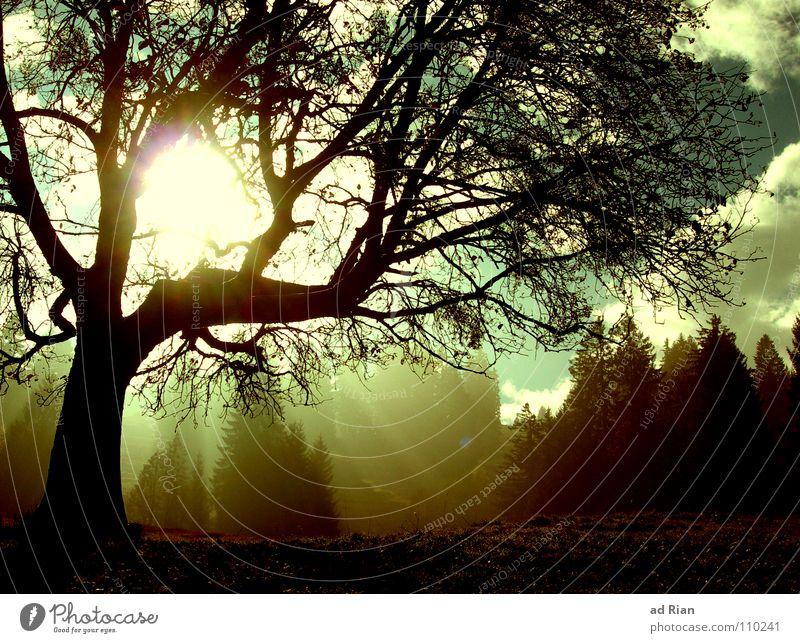 Cold Day in the Sun Baum Blatt Licht Physik kalt Herbst Erkenntnis Eichhörnchen Vogel Blattläuse Birke Wolken braun grün wandern Hirsche Gemse Jäger Himmel
