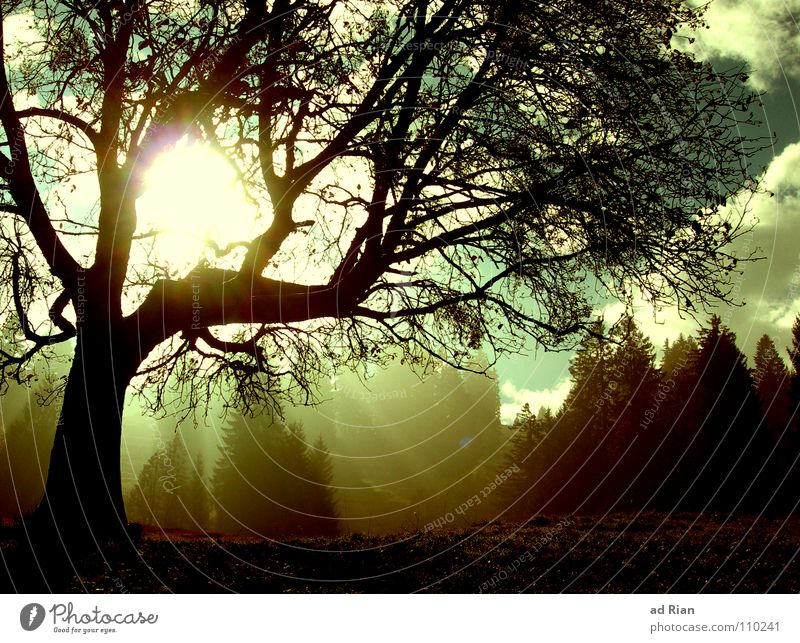 Cold Day in the Sun Himmel Baum Sonne grün blau Blatt Wolken kalt Schnee Herbst Wärme braun Vogel wandern Physik Ast