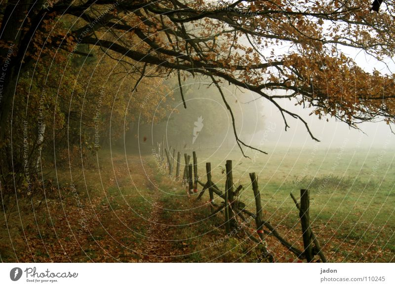 Herbstfarben mehrfarbig Lichterscheinung Gemälde Umwelt Natur Landschaft Nebel Baum Blatt Wiese Feld Wege & Pfade fallen frieren gehen streichen kalt Romantik