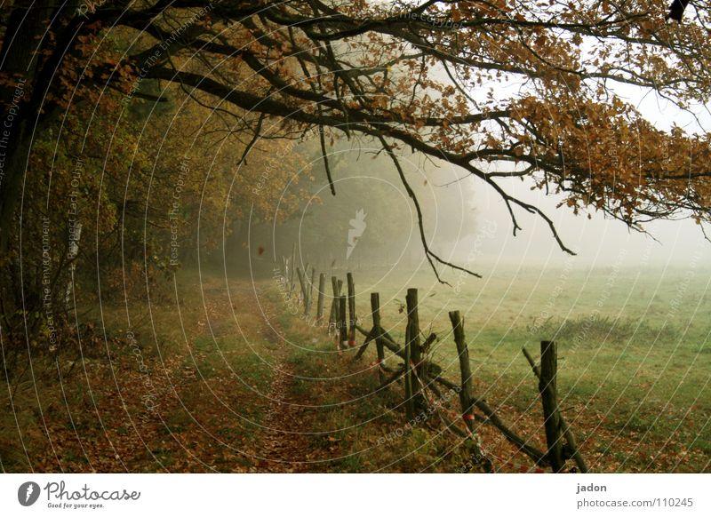 Herbstfarben Natur Baum Blatt Einsamkeit kalt Wiese Wege & Pfade Landschaft Feld gehen Nebel Umwelt Romantik fallen streichen