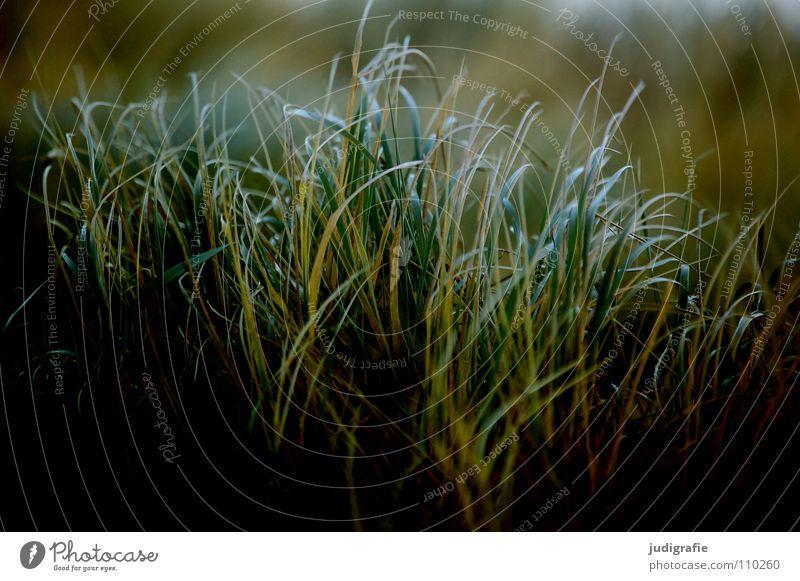 Gras Strand See Meer grün Stengel Halm Wildnis Umwelt Pflanze Farbe Sand Küste Wind Natur Linie Strukturen & Formen büschel Spitze wehen