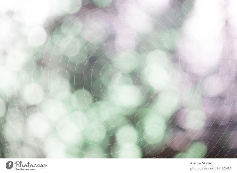 Bokehhhh! grün Farbe Freude Ferne Stil Hintergrundbild Lifestyle Stimmung glänzend Design träumen leuchten elegant Fröhlichkeit ästhetisch fantastisch