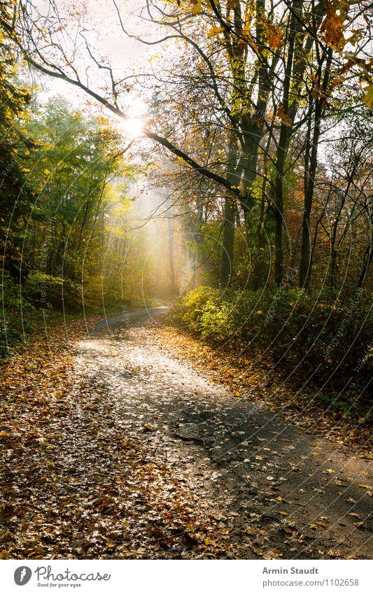 Mystischer Waldweg Himmel Natur Ferien & Urlaub & Reisen Sonne Blatt Landschaft Ferne Umwelt Herbst natürlich Glück Freiheit Stimmung hell Lifestyle