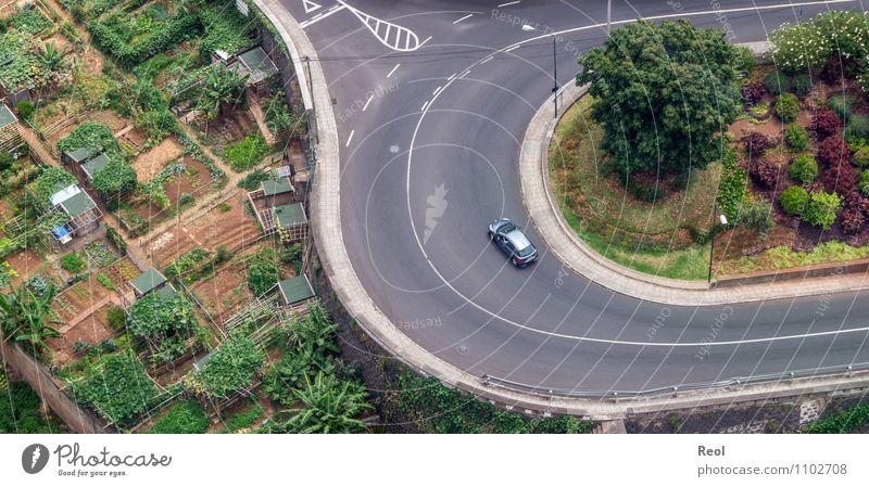 Kurve Natur Landschaft Urelemente Erde Pflanze Baum Bananenstaude Bananenplantage Landwirtschaft Schrebergarten Garten Wiese Feld Funchal Madeira Verkehr