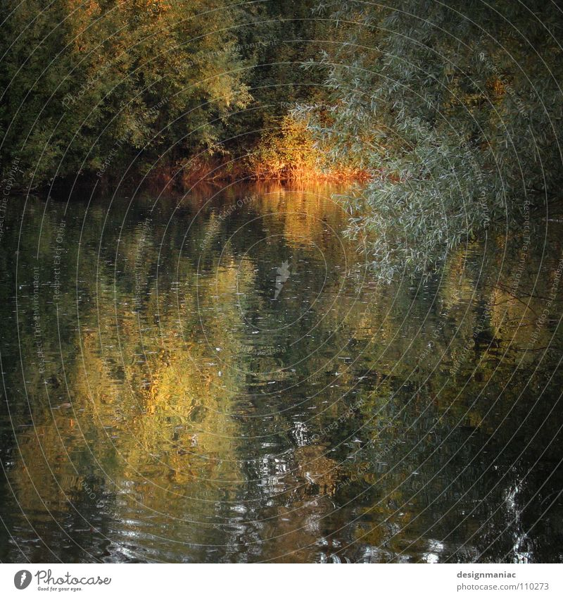 Loch Ness (gerade abgetaucht) Wasser Baum grün Blatt dunkel kalt Herbst hell braun nass Sträucher Bild tauchen geheimnisvoll Gemälde verstecken