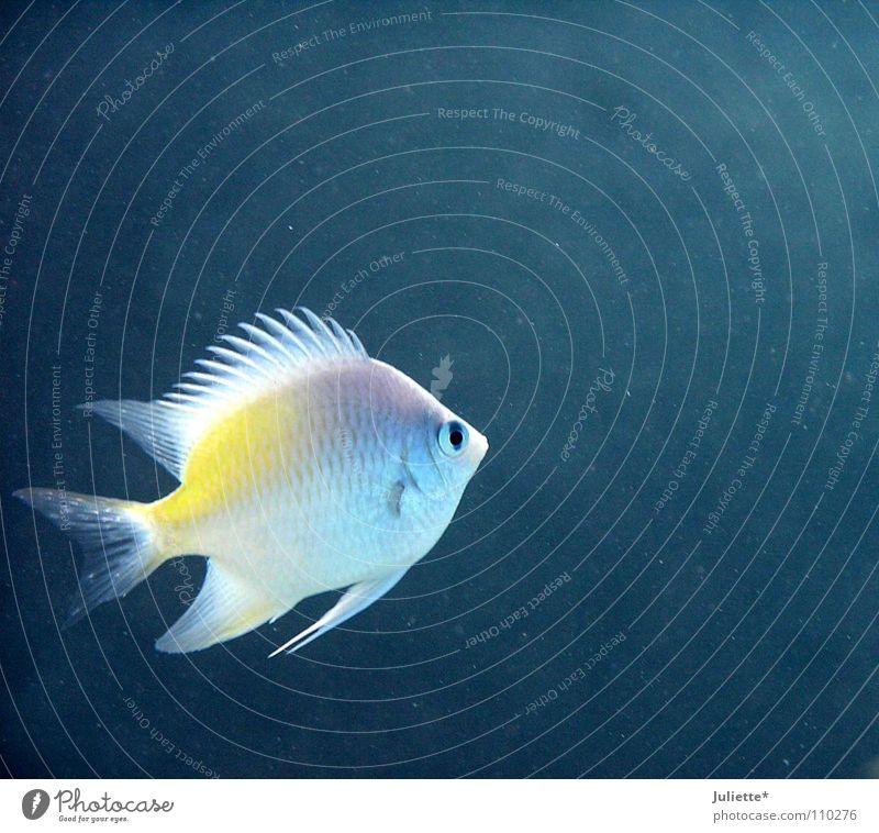 Allein im großen Meer Wasser blau Einsamkeit Farbe Fisch Angeln Schwimmhilfe Fischer Blubbern