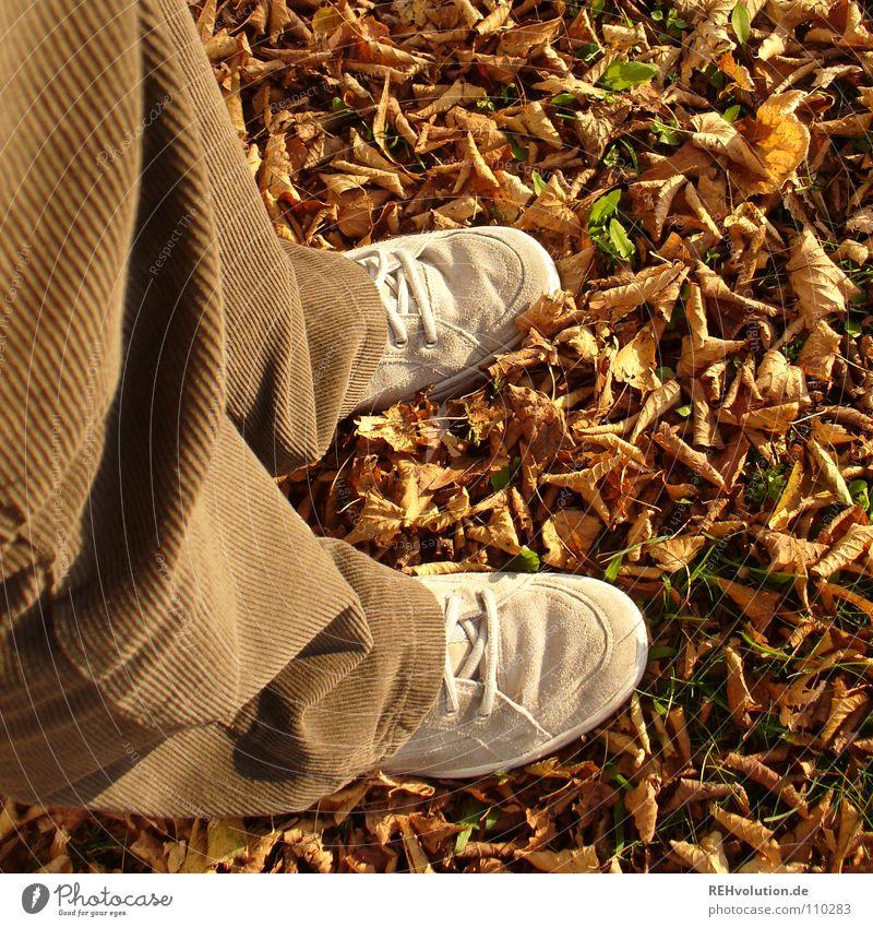 Das Rascheln ... Freude Blatt Einsamkeit kalt Herbst Schuhe braun gehen stehen Wandel & Veränderung Vergänglichkeit Hose trocken Abschied Turnschuh brechen