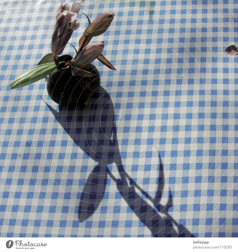 schiffe versenken III blau weiß Blume Herbst orange rosa Tisch Dekoration & Verzierung Gastronomie Café Restaurant Decke kariert Verabredung verschönern