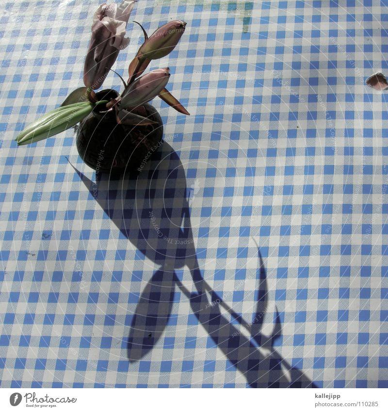 schiffe versenken III Blume Tisch weiß rosa Dekoration & Verzierung Tischdekoration verschönern Café Restaurant Astern Gratulation Jubiläum Herbst Verabredung