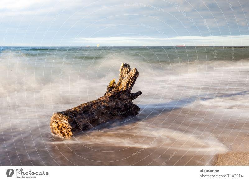 Baumstamm im Meer Wasser Landschaft Wolken Strand Gefühle Tod Zufriedenheit Wellen Romantik Im Wasser treiben Ostsee Fernweh Mecklenburg-Vorpommern horizontal
