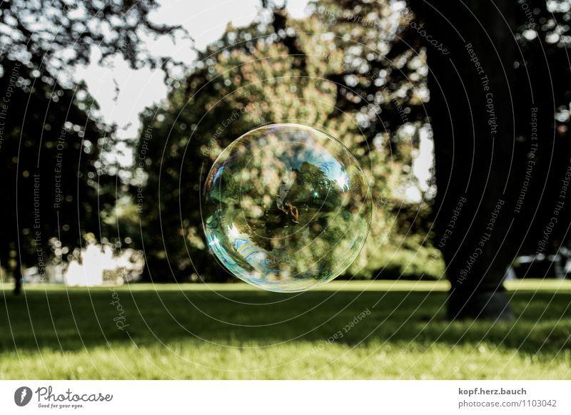 Die Welt ist eine Seifenblase Blume Umwelt Glück Freiheit Park träumen Zufriedenheit Idylle Kindheit frei einzigartig Hoffnung Schutz Tropfen Ziel Wunsch