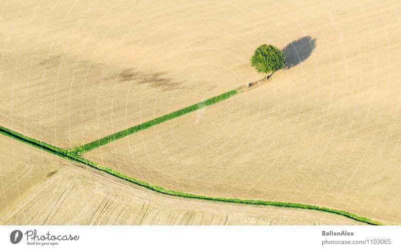 allein Natur Baum Einsamkeit Landschaft Herbst Feld einzigartig