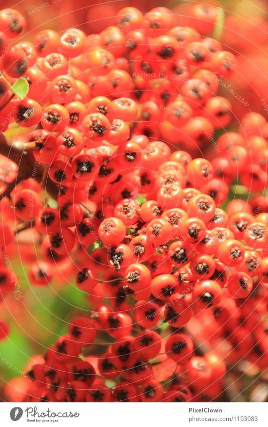 Beeren Natur Pflanze schön Sommer Landschaft Tier Wald Umwelt Wiese Blüte natürlich Garten Lifestyle glänzend Park orange