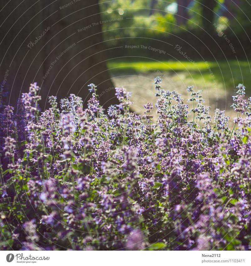 Duftpause Umwelt Natur Pflanze Luft Frühling Sommer Wetter Schönes Wetter Blume Gras Sträucher Blüte Garten Park violett Farbfoto Außenaufnahme Nahaufnahme