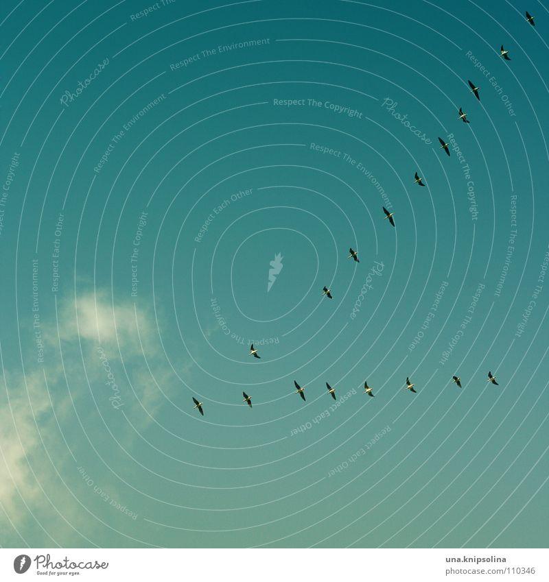 vogelzug die erste Winter Wärme kalt Schnee Herbst Vogel Eis fliegen Frost Jahreszeiten Physik Schwarm Flucht Formation Süden Dreieck