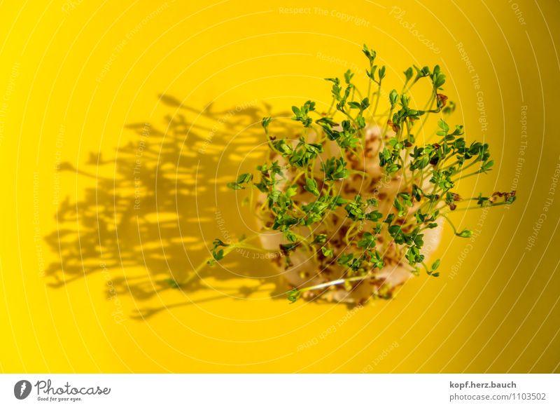 Halt die Kresse Lebensmittel Kräuter & Gewürze Ernährung Diät Fasten Presse Reinlichkeit Sauberkeit Reinheit bescheiden sparsam Überraschung Beginn