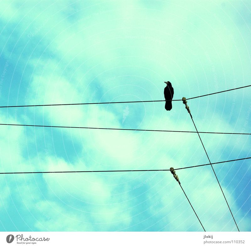 Observer Himmel blau weiß schwarz Tier Einsamkeit oben Linie Vogel sitzen warten hoch Elektrizität Kabel Feder beobachten
