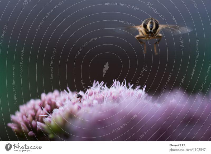 Landung Natur Pflanze Sommer Blume Tier Umwelt Wiese Frühling Blüte Garten fliegen Park Luft Fliege frei hoch