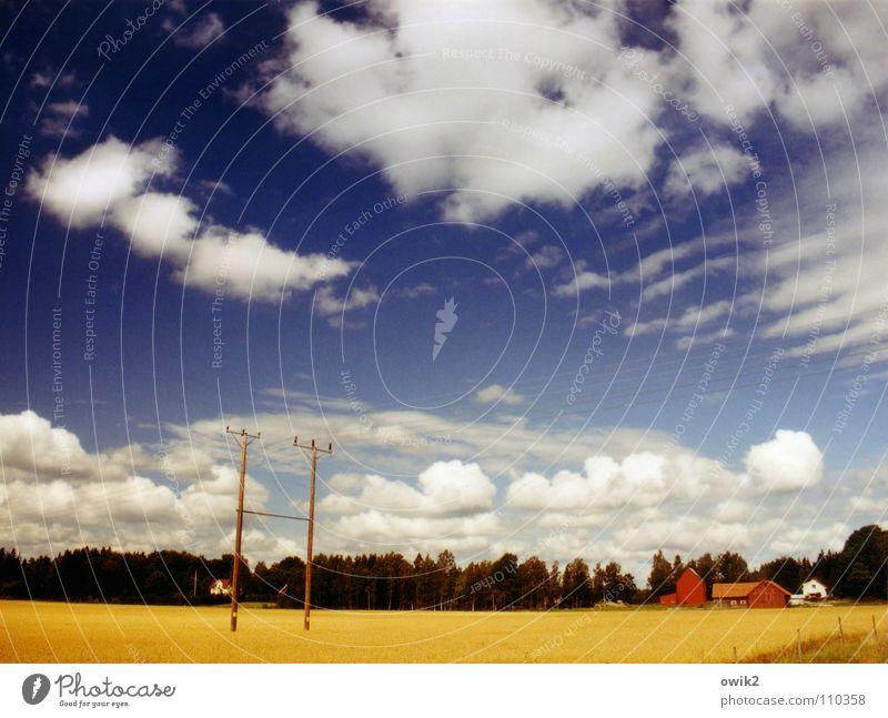 Schwedische Farbenlehre Sommer Landwirtschaft Forstwirtschaft Umwelt Natur Landschaft Pflanze Himmel Wolken Horizont Klima Schönes Wetter Baum Feld Getreidefeld