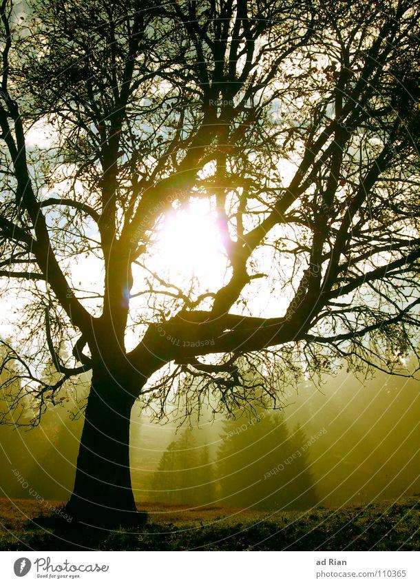 Summer's End Himmel Baum Sonne grün Blatt Wald kalt Schnee Herbst Wärme braun wandern Wetter Ast Erkenntnis Kiefer