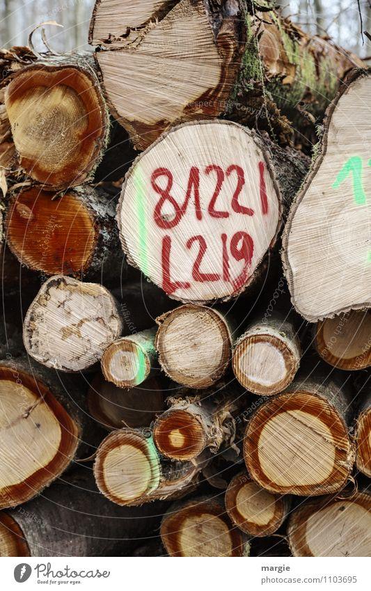Ein Stapel Baumstämme im Wald mit dem Code 81221L 219 Umwelt Natur Holz Wachstum braun Trennung Umweltschutz Vergänglichkeit selektiv sortieren Förster