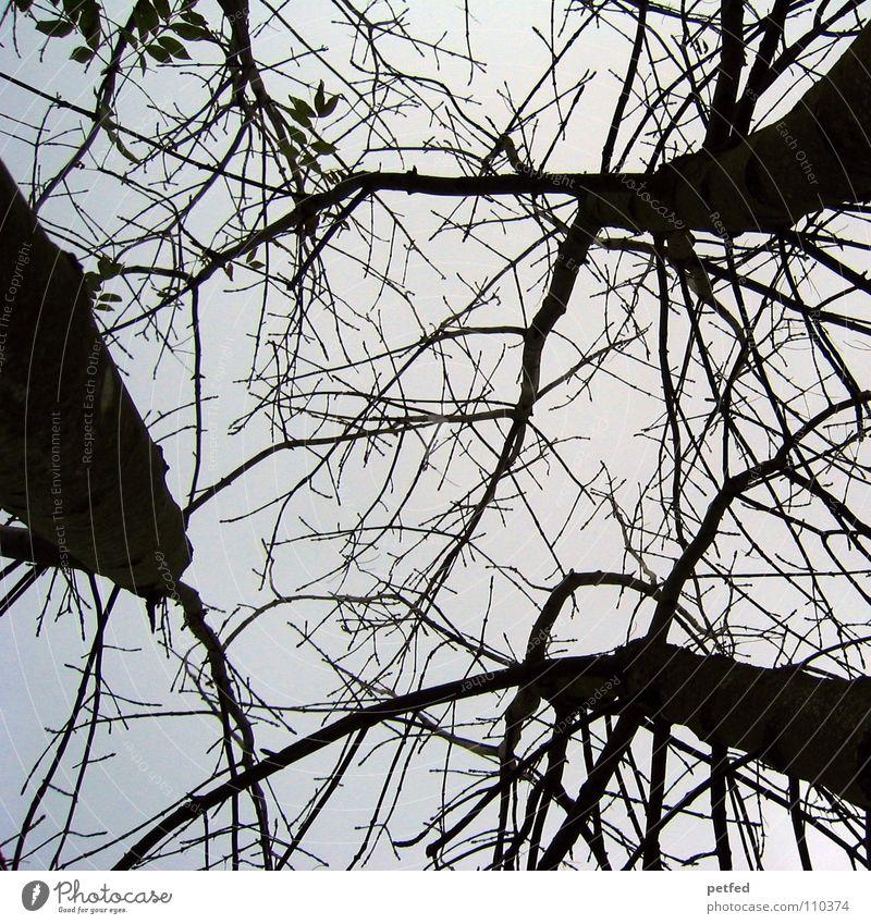 Baumkronen V Herbst Wald Blatt Winter schwarz weiß unten Wolken Himmel Ast Zweig Natur blau Schatten hoch fallen Wind