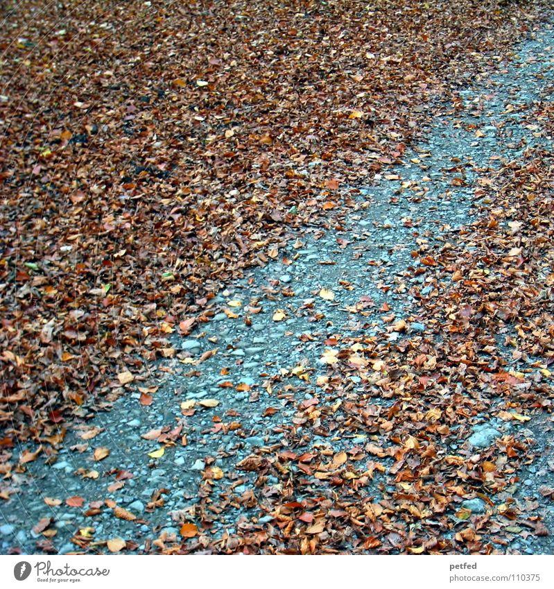 Gestreift Blatt braun grau Herbst Winter mehrere Baum Wege & Pfade Bodenbelag Wetter alt viele Erde