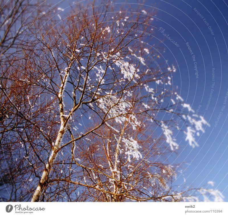 Winterlied Natur Pflanze blau kalt Umwelt Bewegung Schnee glänzend Eis leuchten Idylle Klima Schönes Wetter Frost Zweig