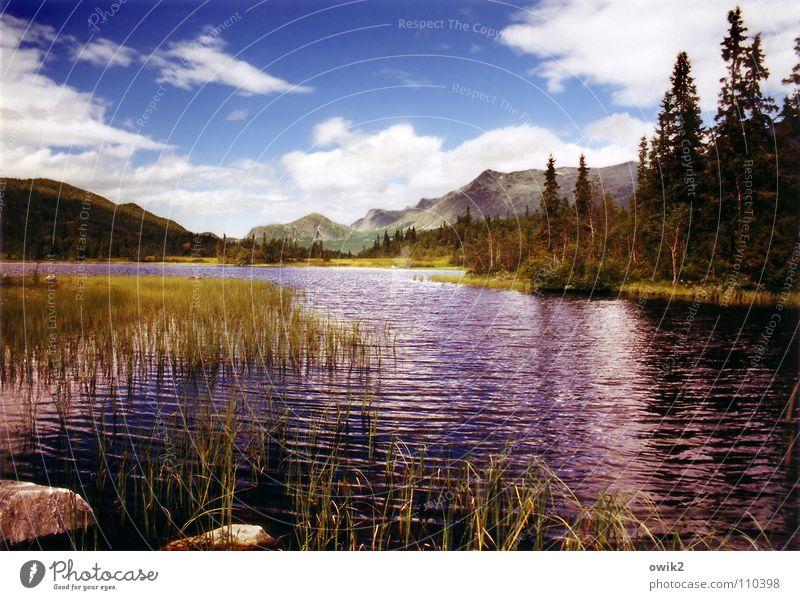 Weit draußen See Gebirgssee Baum Wolken Ferien & Urlaub & Reisen Sommer Panorama (Aussicht) Norwegen Skandinavien Fluss Bach Landschaft Natur Berge u. Gebirge