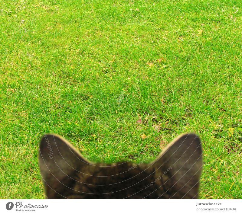 Unendliche Weiten, Mister Schpock Katze hören Publikum Kontrolle Landraubtier beobachten Wiese Gras Hauskatze Mausefalle Dose Ausdauer geduldig Zeit