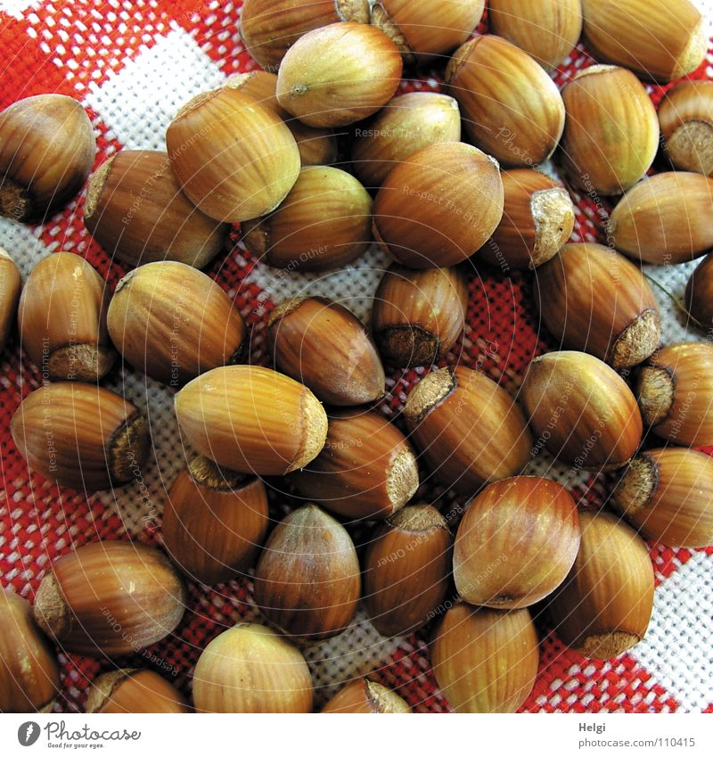 viele reife Haselnüsse liegen auf einer rot-weiß-karierten Stoffdecke Nuss Haselnuss Herbst gepflückt Oval braun nebeneinander Ernährung Haufen lecker