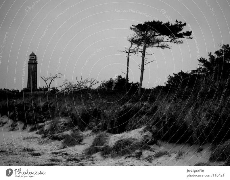 Weststrand See Leuchtturm Meer Strand Küste Gras Navigation Orientierung salzig Ferien & Urlaub & Reisen Seezeichen Fischland-Darß-Zingst Prerow Luft Baum