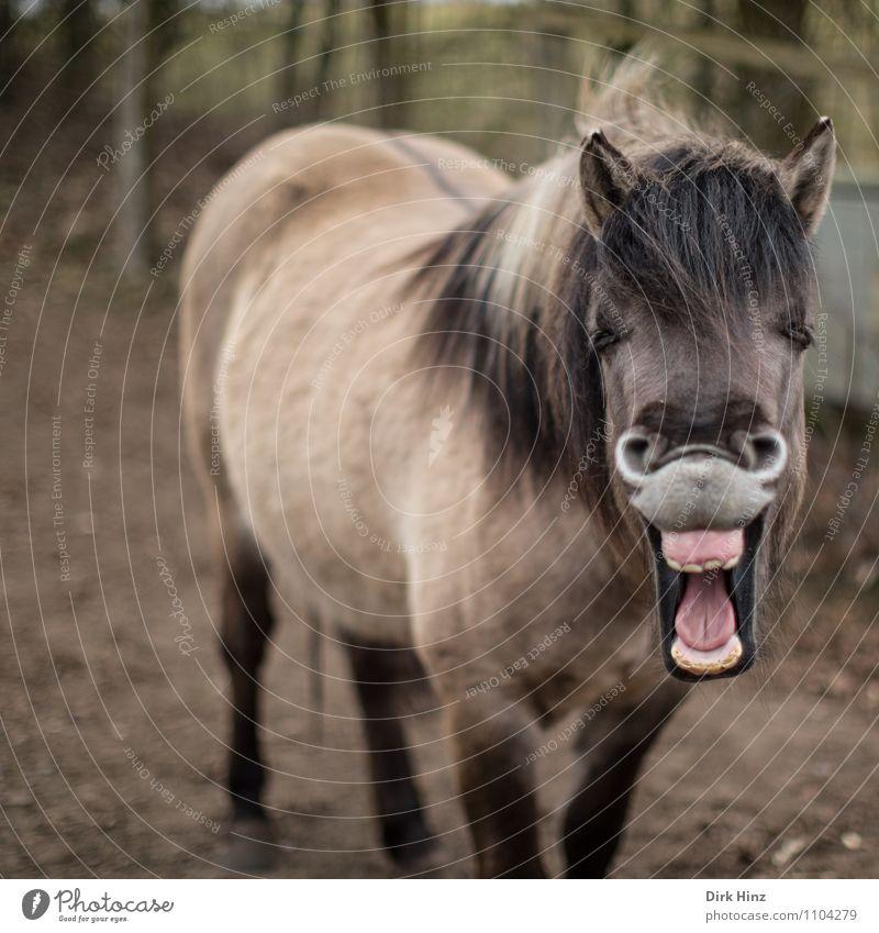Lucky Horse II Pferd Lächeln lachen stehen außergewöhnlich Freundlichkeit Fröhlichkeit Glück lustig braun rosa Gefühle Stimmung Freude Lebensfreude