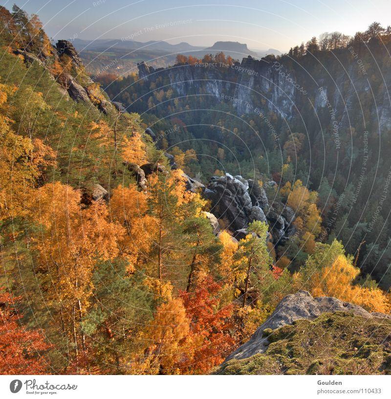 Goldrausch Herbst Sachsen Schweiz Blatt HDR Baum Wald Jahreszeiten rot braun gelb Ferien & Urlaub & Reisen Erholung Sandstein wandern Bergsteigen gold Ausflug