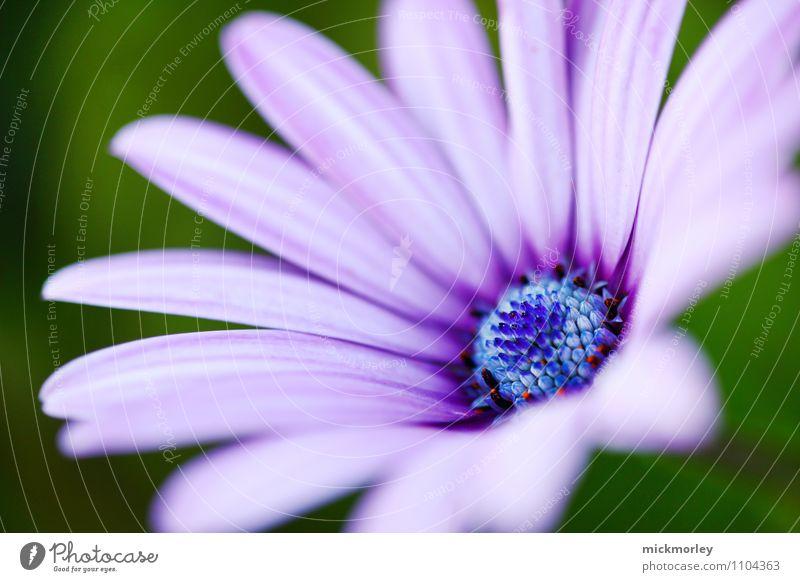 Lila Natur Pflanze schön Blume Leben Gefühle Wiese Frühling Glück Gesundheit Freiheit Garten Gesundheitswesen träumen Freizeit & Hobby Zufriedenheit