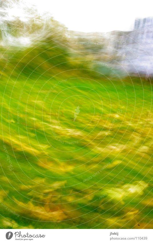 *wischwisch* Baum Blatt Haus Herbst Wiese Fenster Gras Bewegung Garten Park Wellen Wind Fassade Spaziergang Rasen Momentaufnahme