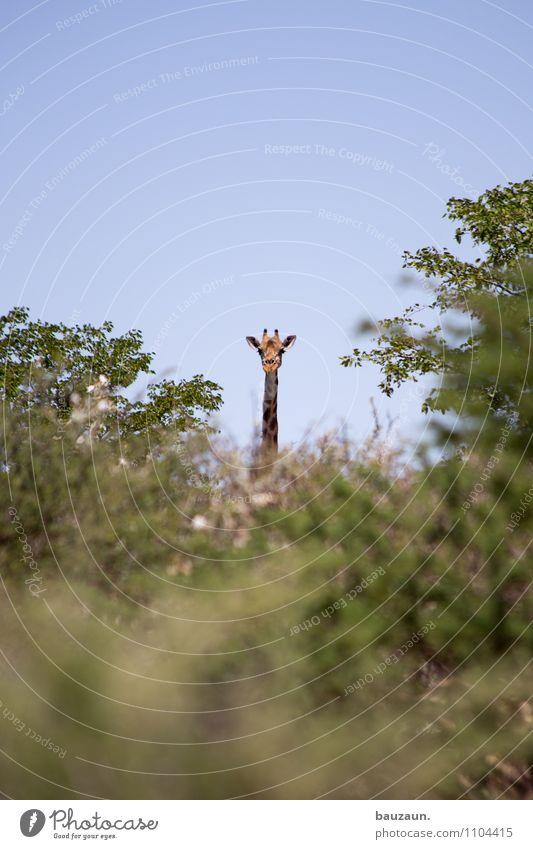was guckste. Himmel Natur Ferien & Urlaub & Reisen schön Baum Landschaft Tier Ferne Umwelt natürlich Freiheit Tourismus Wildtier Sträucher Ausflug beobachten