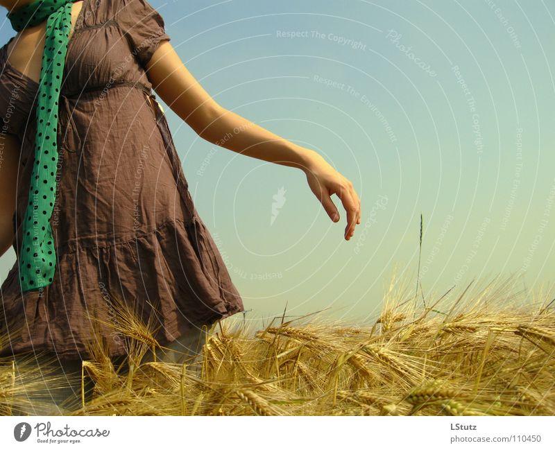 fields of gold Mensch Frau Natur Jugendliche blau grün Sommer ruhig Erwachsene gelb Junge Frau Leben Bewegung 18-30 Jahre braun Feld