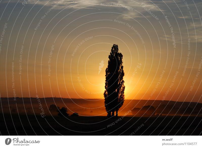 Erntezeit Landwirtschaft Forstwirtschaft Umwelt Natur Landschaft Pflanze Sonnenaufgang Sonnenuntergang Sommer Herbst Schönes Wetter Baum Nutzpflanze Feld blau