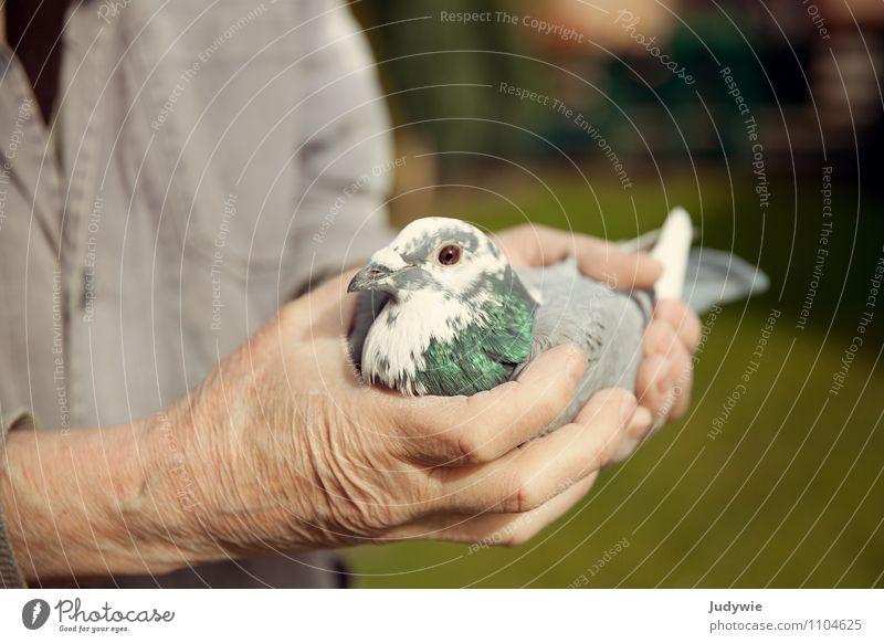 Lieber die Taube in der Hand.. Mensch Mann Tier Erwachsene Leben Senior Wiese Garten Vogel maskulin Freizeit & Hobby Häusliches Leben Angst 60 und älter Neugier