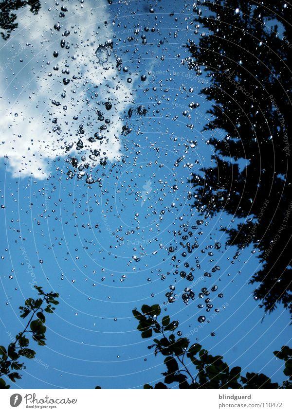 All Drops Flying High Wasser Himmel Baum grün blau Sommer Freude Blatt Wolken Wald dunkel Spielen Bewegung Regen Luft glänzend