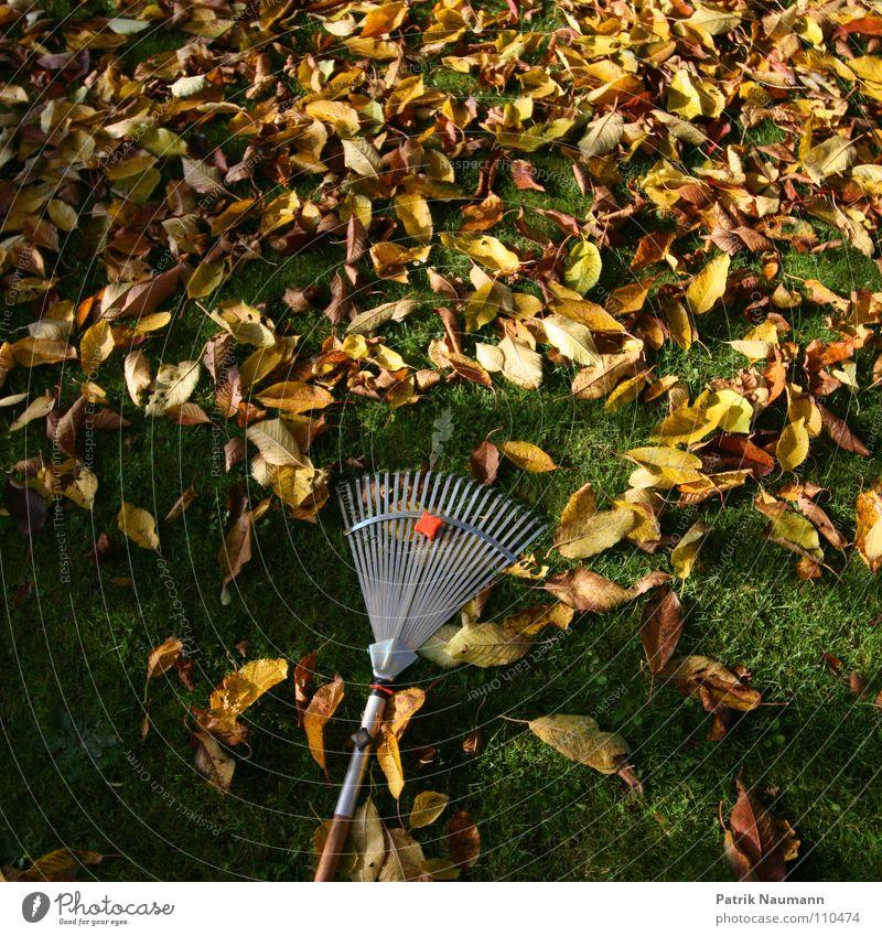 typische Herbstarbeit. Baum grün Blatt gelb Gras Garten gold fallen Müll Vergänglichkeit Arbeit & Erwerbstätigkeit Gärtner herbstlich Gärtnerei Rechen