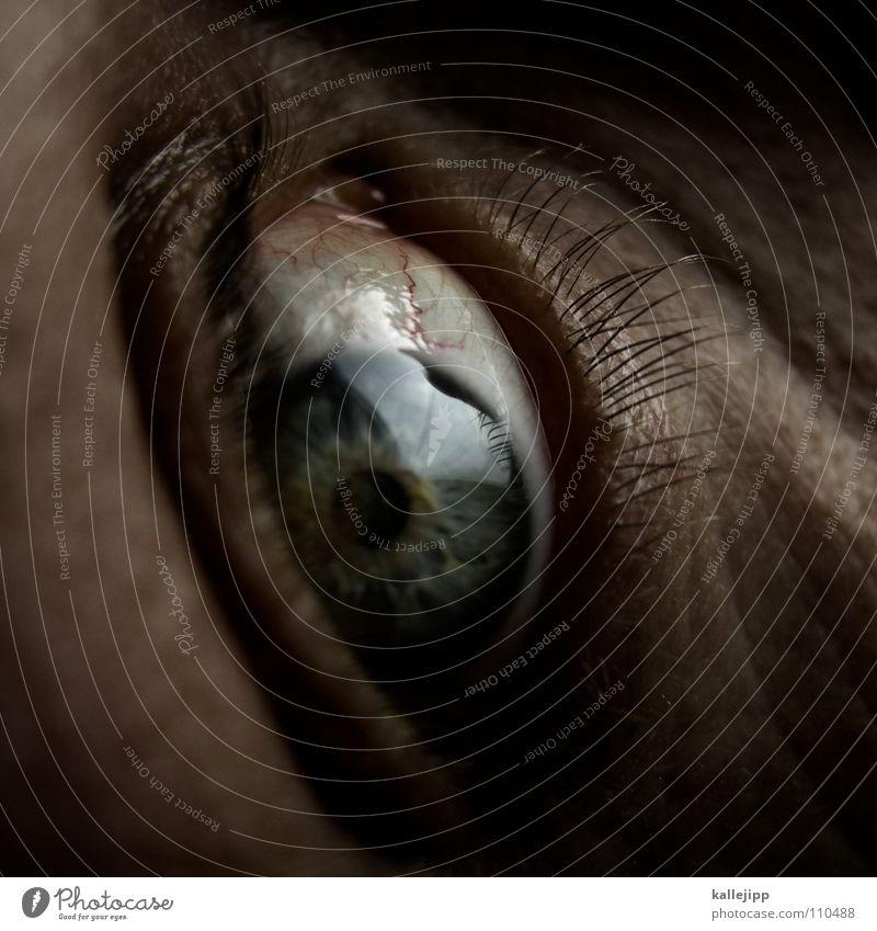 trust? schreien Angst Panik Gefäße Äderchen Gefühle nah Flucht aufreißen Pupille Wimpern Augenbraue Organ Sinnesorgane Sommersprossen Pore Optiker Mann