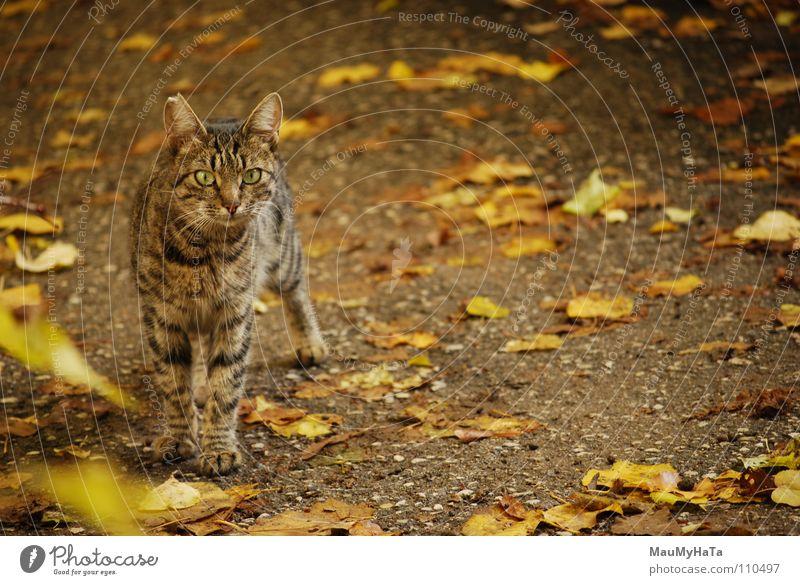 Cat Katze Tier gelb Jagd beste Fahrradständer