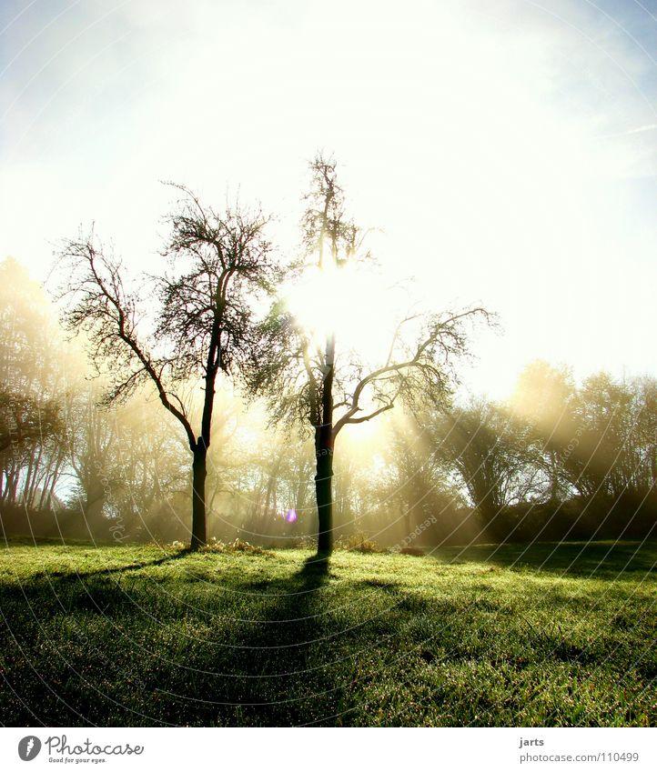 Herbstmorgen Natur Himmel Baum Sonne Wiese Beleuchtung Nebel Frieden Erkenntnis aufwachen Himmelskörper & Weltall