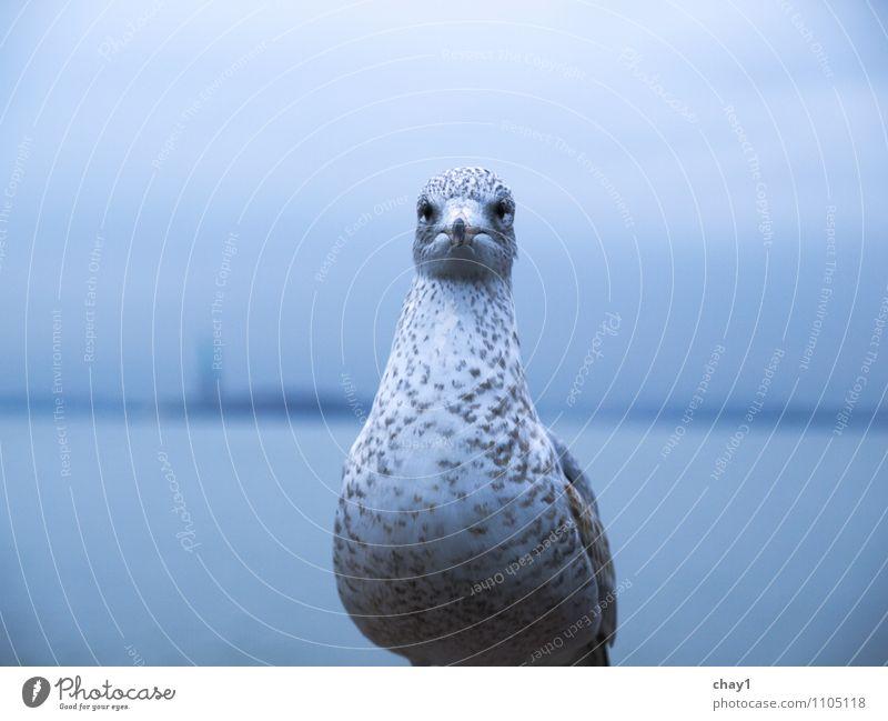 Großstadtgeschöpf Natur Stadt alt ruhig Tier grau fliegen Stimmung Vogel träumen dreckig Wildtier stehen warten beobachten Sehnsucht