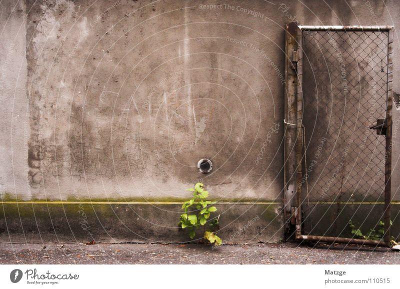 """""""Wandab!"""" grau trist Mauer Rost Maschendraht Gitter grün Hoffnung verfallen alt hergenommen Tür Tor Gittertür Gittertor Planze Lichtblick leuchten"""